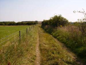 Bridleway near South Farm