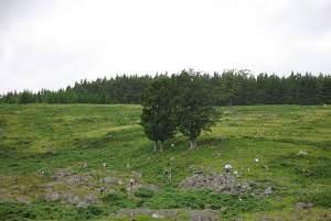 Former woodland, Alvie