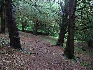 Yew woods, Arnside Knott.