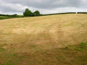 Harvested Field near Ashey
