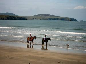 Horses at Whitesands Bay