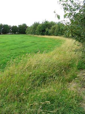 Grazing field with set aside strip at Croftside