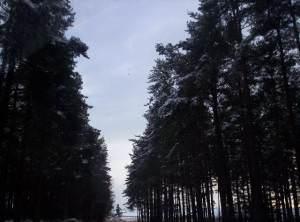 Capo Woods