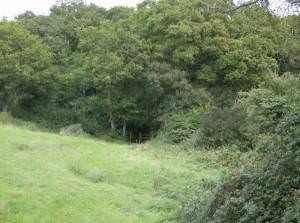 Entering Parkhurst Forest