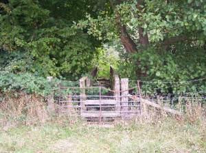 Footbridge into the Woods