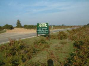 Broomy Walk, New Forest