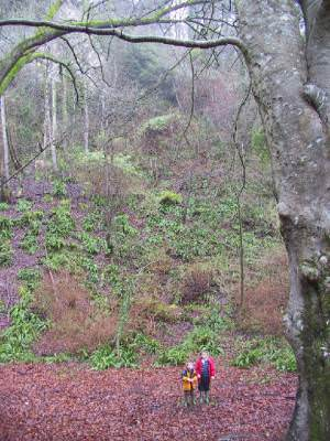 Woodlands in the Undercliff