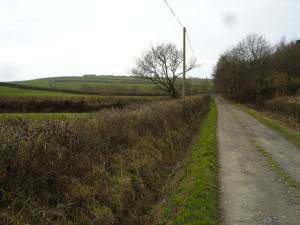 Fields in Poundstock