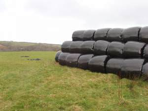 Bales in black plastic at Pencuke
