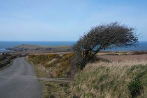 Access road to Cardigan Island Coastal Farm Park