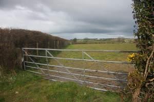 Field boundary and gate near Nantgwynfynydd