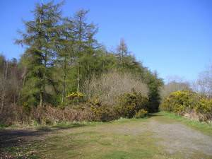 Open Access Woodland