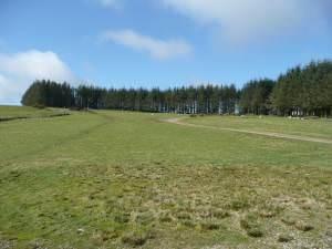 Conifer shelterbelt