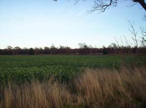 Field and Woodland