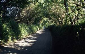 Lane between Tregoodwell and Trefrew