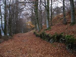 Woodland track at Knock Mary