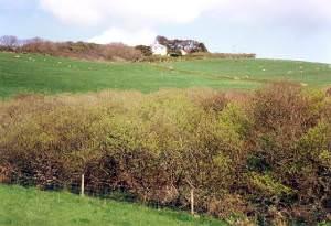 Hillside near Soar Mill Cove, Malborough