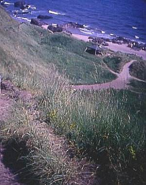 Cliff Path to St. Cyrus Beach