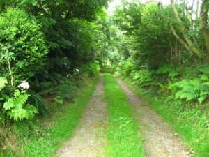 Leafy lane to Gilfach Uchaf