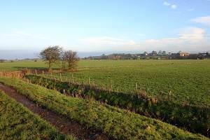 Thurnham fields