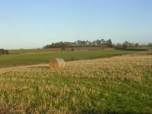 Farmland, near Greta Bridge