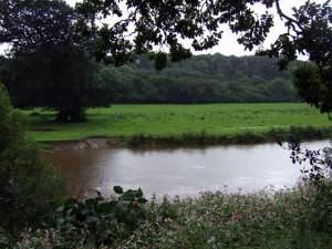 Afon Teifi at Llandyfriog