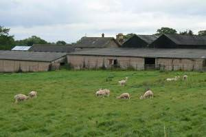 Tymparon Hall Farm