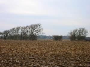 Frozen field near Hale Farm