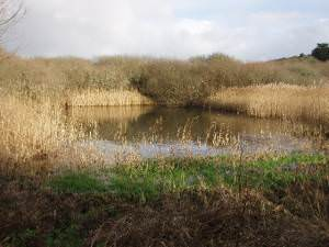 Bird Sanctuary: Marazion Marsh