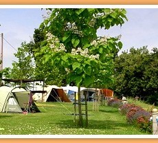 camping_pitches-brouquere.jpg