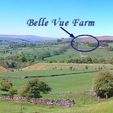 Belle Vue Farm