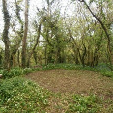 woodland-pitch-faerie-thyme